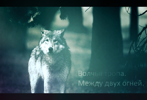 http://forumstatic.ru/files/0011/3d/58/82559.png