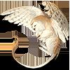 Совогрифон Алмазный Клюв |
