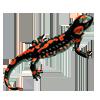 Огненная саламандра Мария |