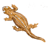 Имбирная саламандра |