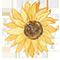 http://forumstatic.ru/files/0019/f2/dd/33797.css